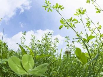 Почему ландыши в букетах губят многие растения, букеты для мужчин недорогой