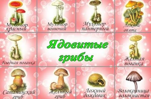 Доклад на тему ядовитые грибы 4880