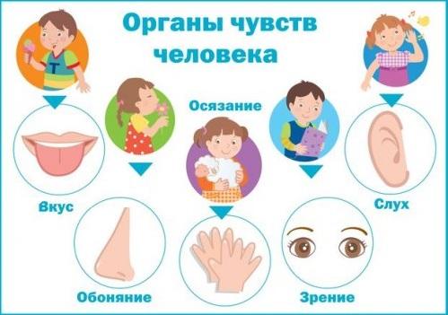 Доклад на тему органы чувств нос 5991