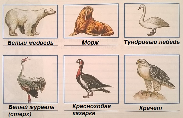 Животные занесенные в красную книгу россии и их картинки 10
